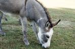 Donkey Lunch